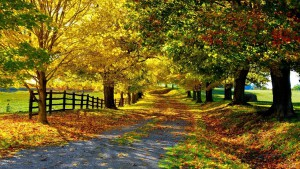autumn-leaves-walkway-2